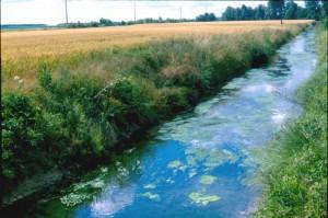 Ruisseau_canalise_PAGE_et_eutrophise
