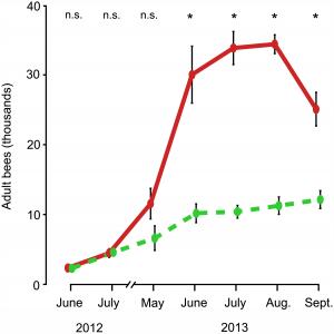 Dynamique de la population d'abeilles adultes de juin 2012 à septembre 2013 En vert : colonies logées dans de petites ruches. En rouge : colonies logées dans de grandes ruches.
