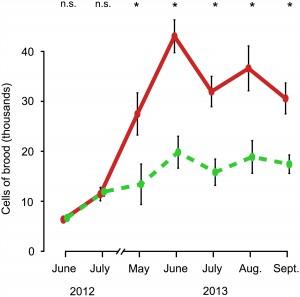 Dynamique de la quantité de couvain de juin 2012 à septembre 2013 En vert : colonies logées dans de petites ruches. En rouge : colonies logées dans de grandes ruches.