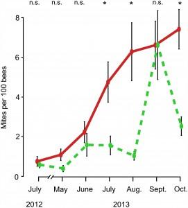Taux d'infestation des varroas sur les abeilles adultes de Juillet 2012 à Octobre 2013 En vert : colonies logées dans de petites ruches. En rouge : colonies logées dans de grandes ruches.